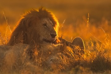 Africa-2018-6.jpg