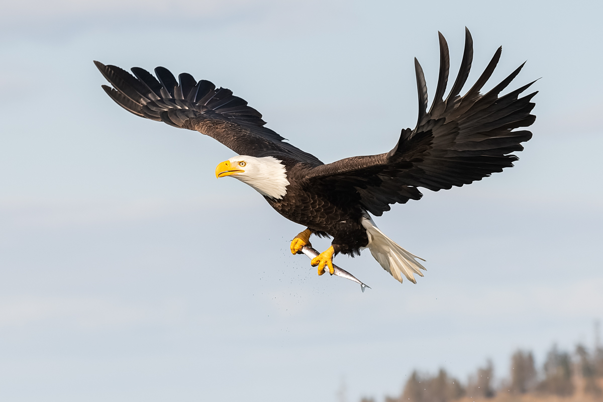 Eagles-2018-10.jpg