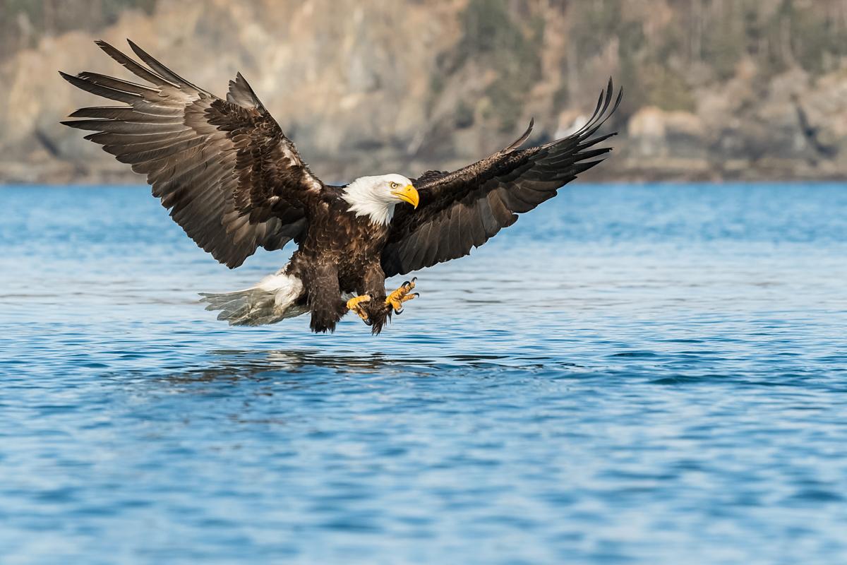 Eagles-2018-11.jpg