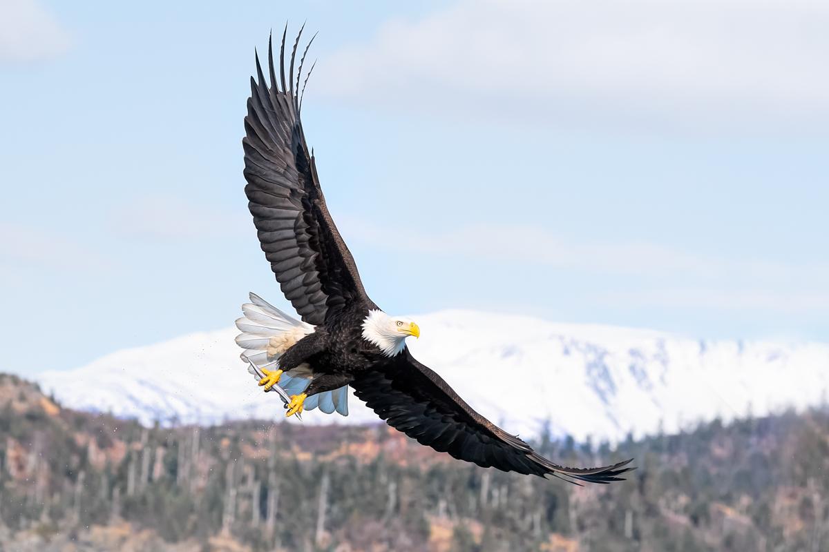 Eagles-2018-18.jpg