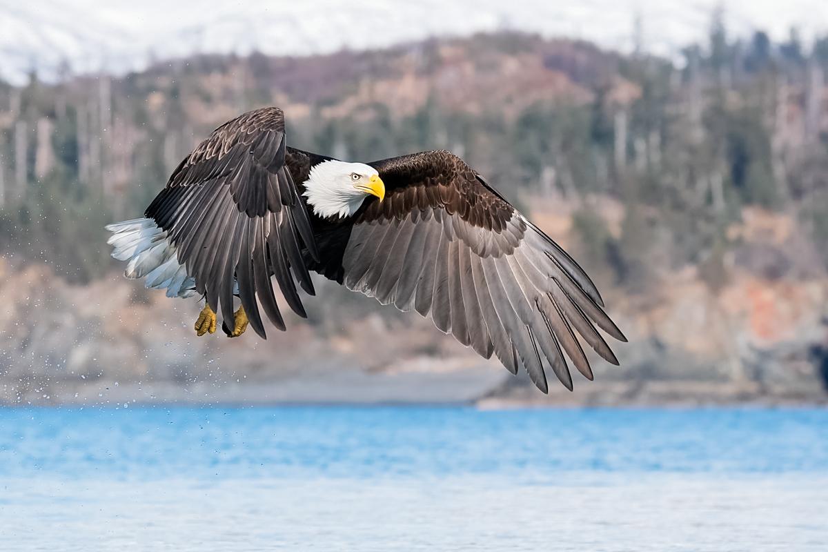 Eagles-2018-4.jpg