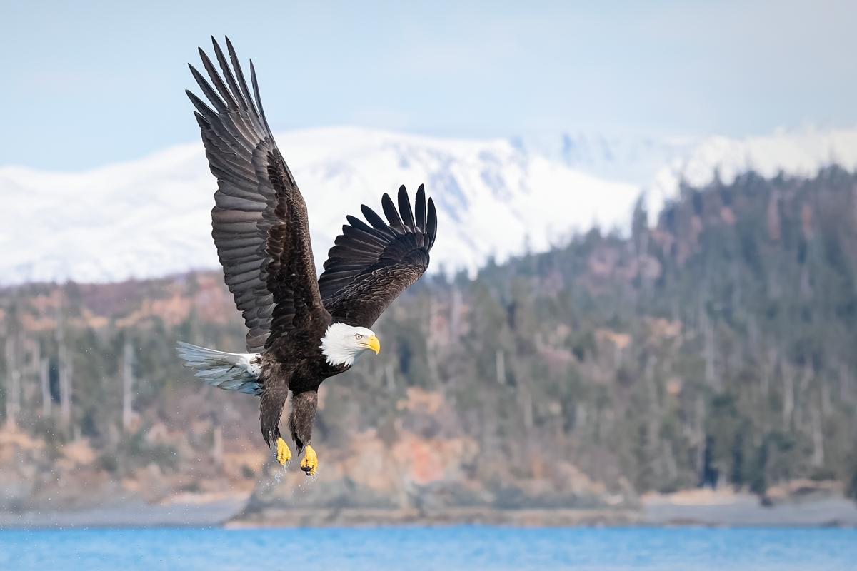 Eagles-2018-5.jpg