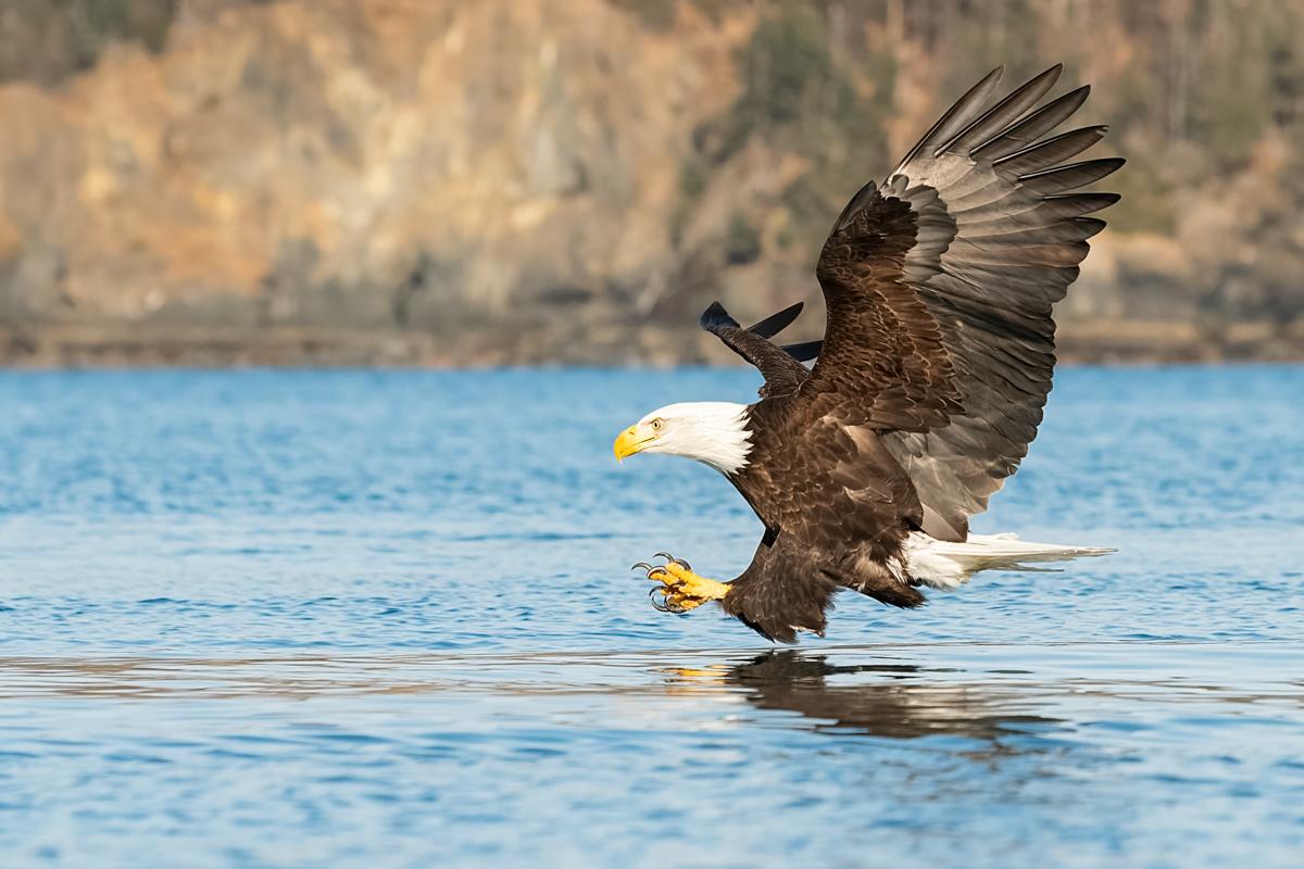Eagles-2018-6.jpg