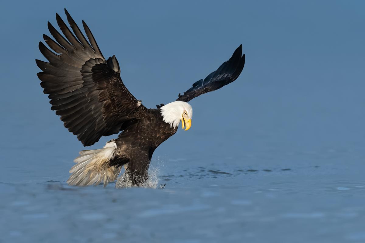 Eagles-2019-10.jpg