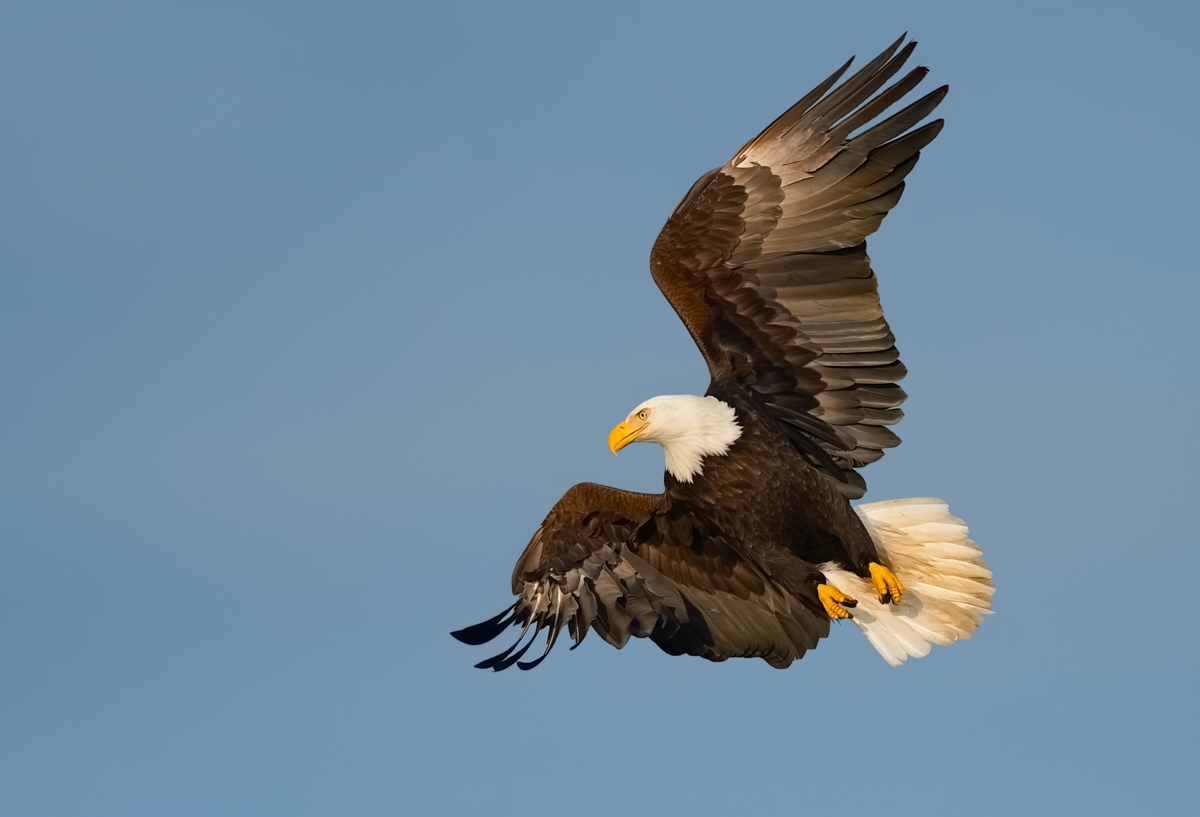 Eagles-2019-11.jpg