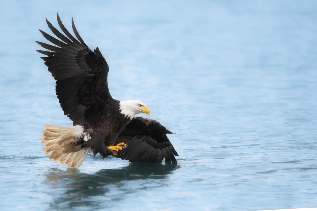 Eagles-2019-13.jpg