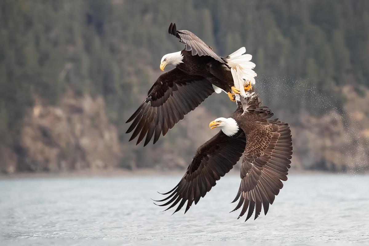 Eagles-2019-14.jpg