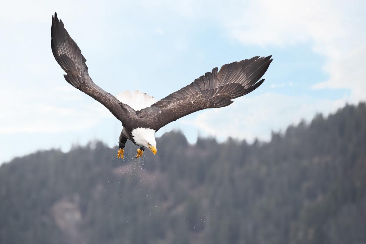 Eagles-2019-18.jpg