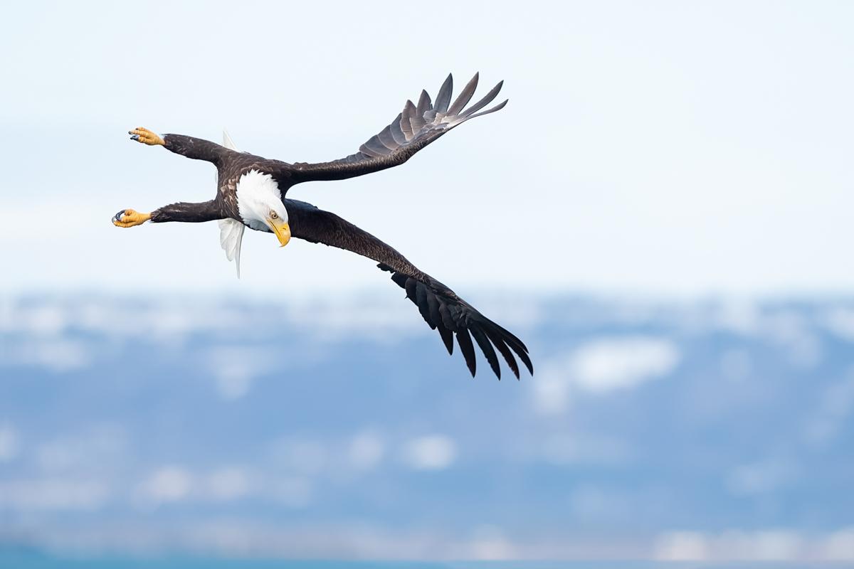 Eagles-2019-4.jpg