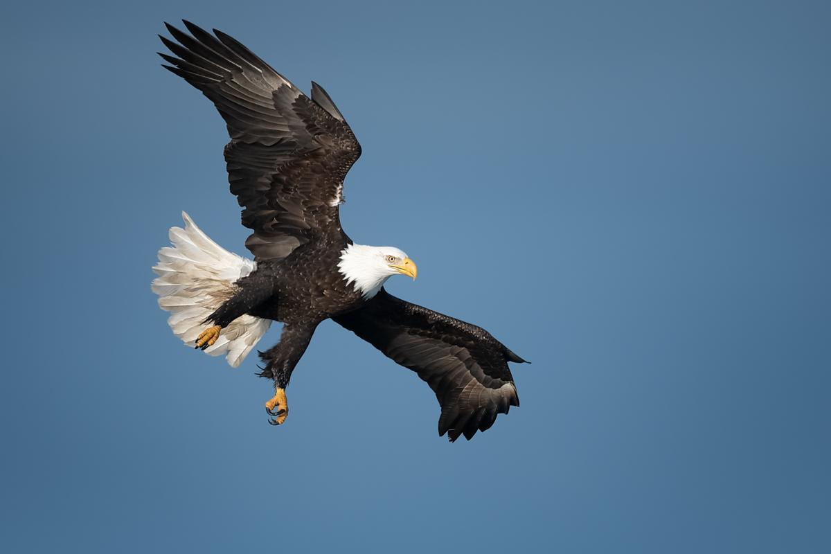 Eagles-2019-9.jpg