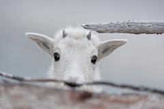 Elk-2019-26.jpg