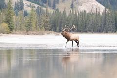 Elk-2019-39.jpg
