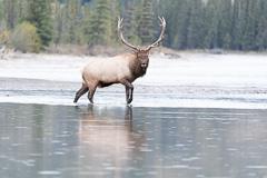 Elk-2019-40.jpg