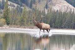 Elk-2019-43.jpg