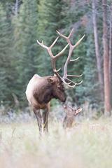 Elk-2019-54.jpg