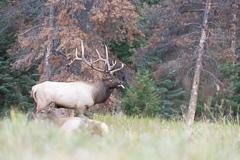 Elk-2019-56.jpg