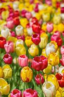 Flowers-2013---0002.jpg