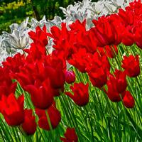 Flowers-2013---0004.jpg