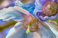 Flowers-2013---0006.jpg