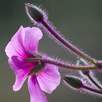 Flowers-2013---0010.jpg