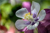 Flowers-2013---0011.jpg
