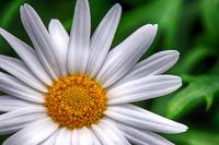 Flowers-2013---0013.jpg