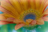Flowers-2013---0016.jpg