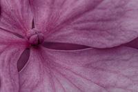 Flowers-2013---0018.jpg