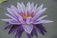 Flowers-2013---0021.jpg