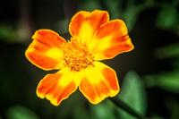 Flowers-2014---0002.jpg