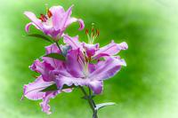 Flowers-2014---0004.jpg