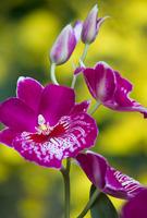 Flowers-2014---0005.jpg
