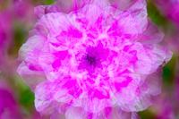 Flowers-2014---0010.jpg
