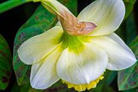 Flowers-2014---0025.jpg