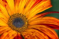 Flowers-2014---0026.jpg