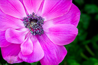 Flowers-2014---0028.jpg