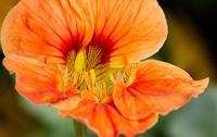 Flowers-2014---0035.jpg