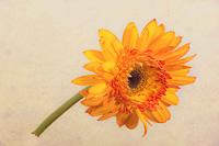 Flowers-2015---0019.jpg